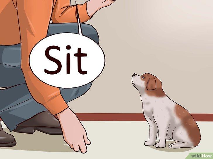 Bagaimana Cara Melatih Anak Anjing Agar Tidak Mengigit